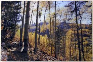 """""""Snowy Autumn Oasis"""" 16"""" x 24"""" on Acrylic"""