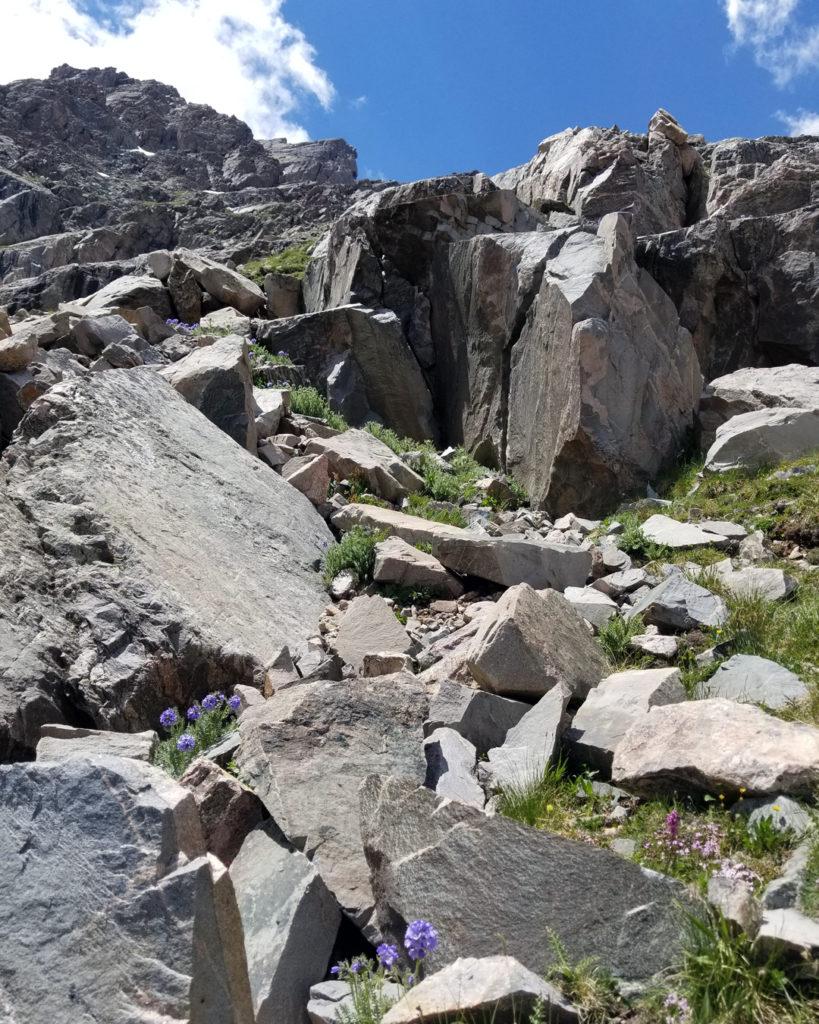 Holy Cross Cliffside Flowers